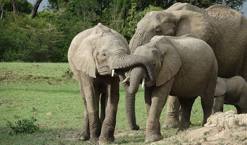 13 Days Kenya Safari Tour