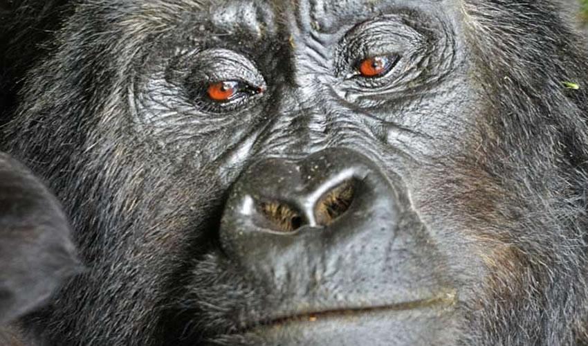 9 Days Rwanda Gorilla Trekking Tour