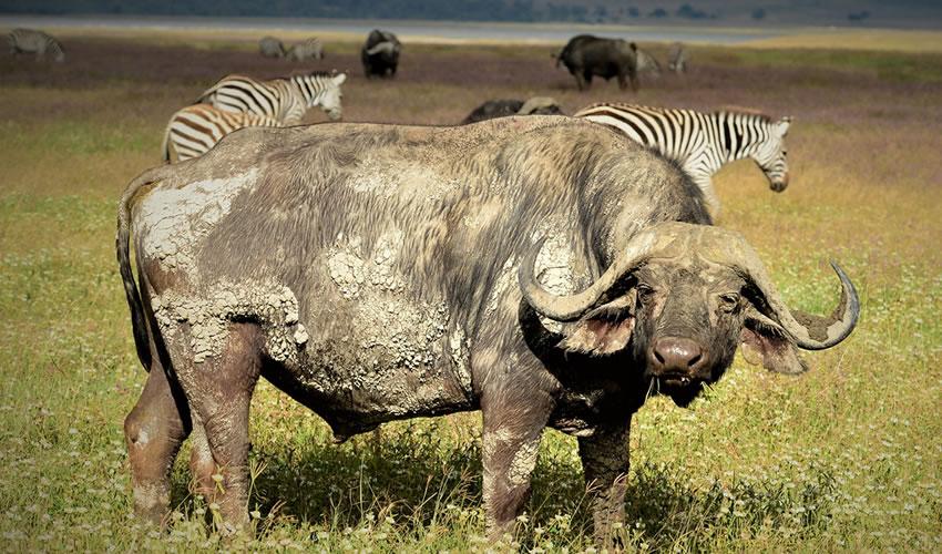 7 Days Serengeti National Park Safari in Tanzania
