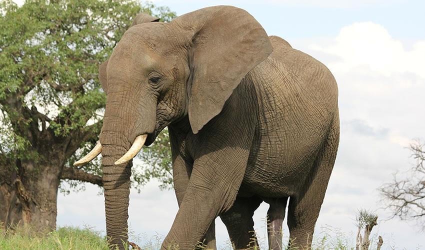 3 Day Tanzania Wildlife Safari Tour