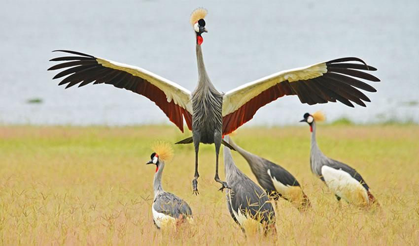 7 Days Bird Watching Safari in Uganda