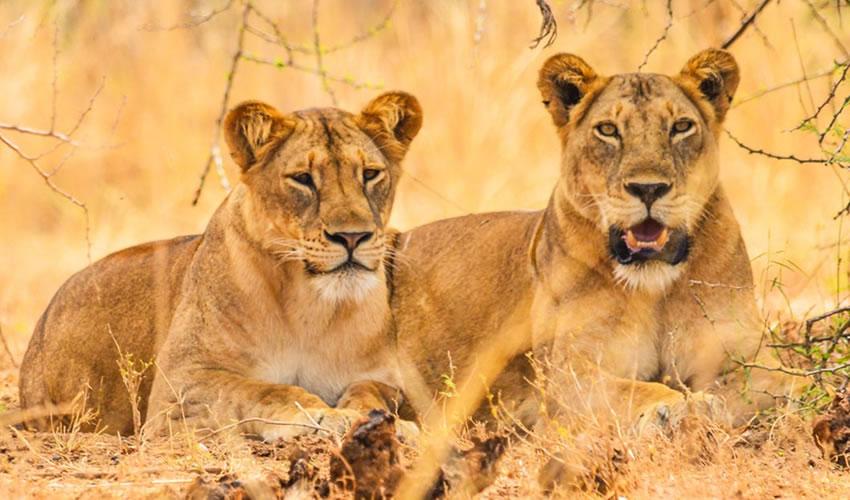 15 Days Uganda Wildlife Safari