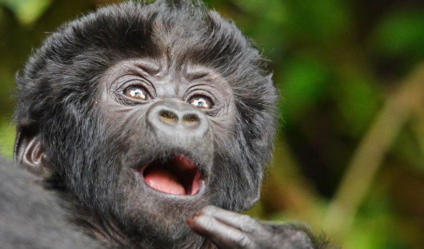 12 Days Gorilla Trekking Rwanda Tour