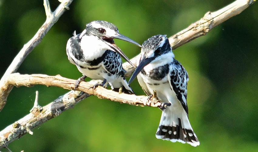 10 Days Uganda Bird Watching Tour