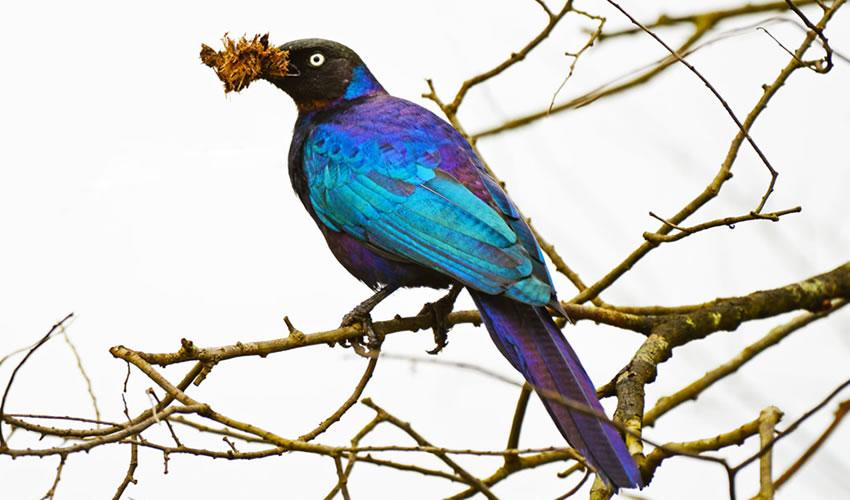 11 Days Uganda Bird Watching Safari