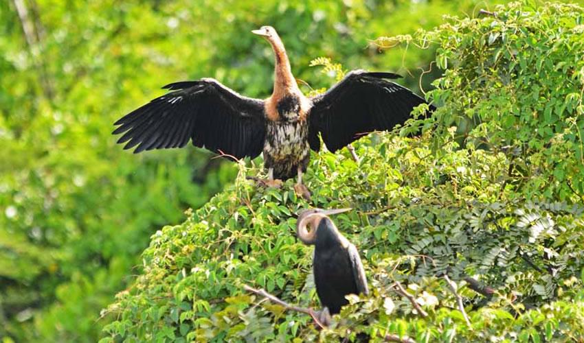 4 Days Eco Tour Safari to Kenya