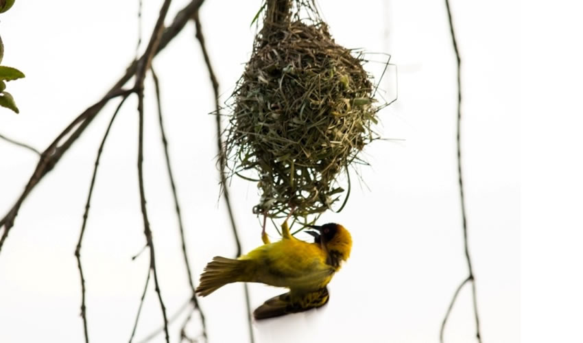 10 Best Birding Spots In Uganda
