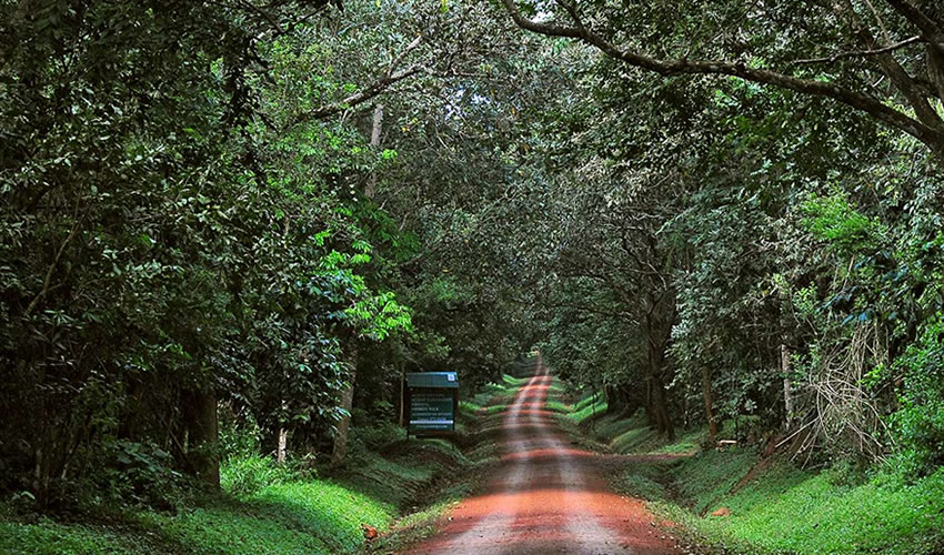 Budongo Forest And Its Hidden Beauty