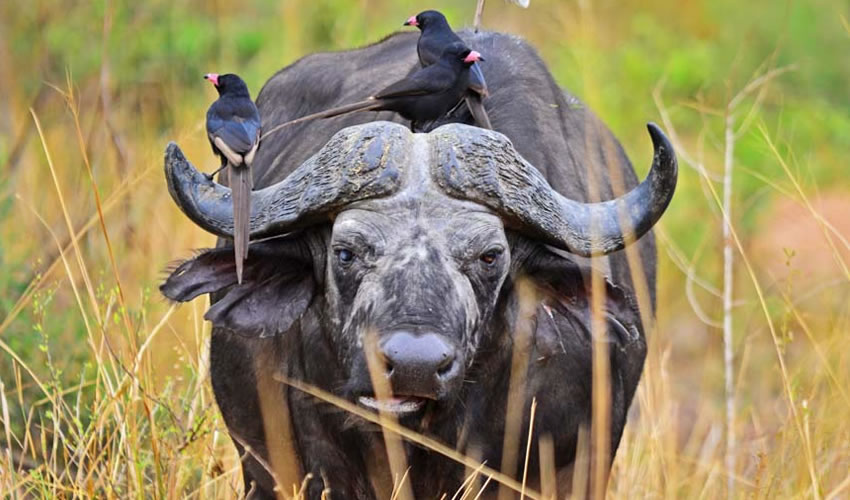 6 Days Discounted Safari Tour in Rwanda
