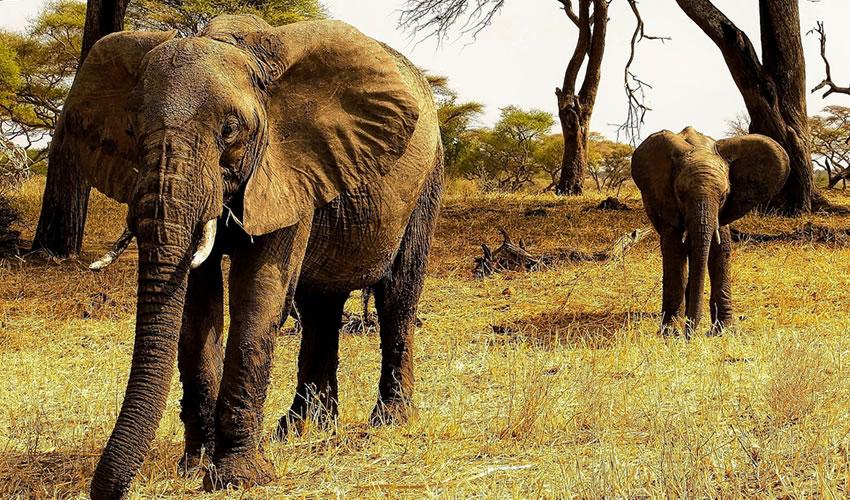 7 Days Tanzania Wildlife Tour