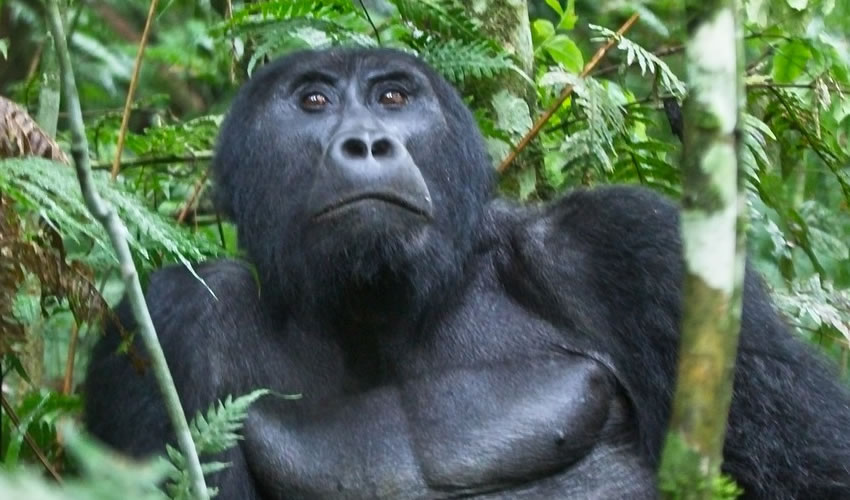 3 Days Gorilla Trekking Rwanda Safari