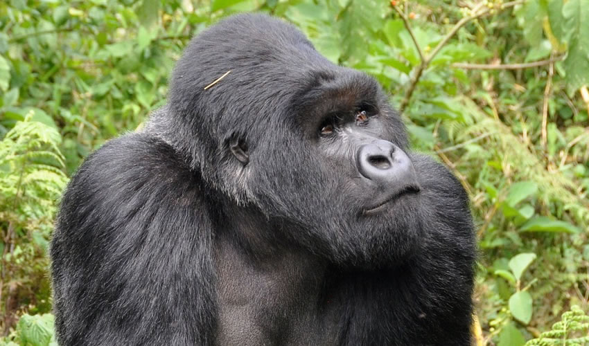 8 Days Uganda Rwanda Combined Gorilla Trekking Tour