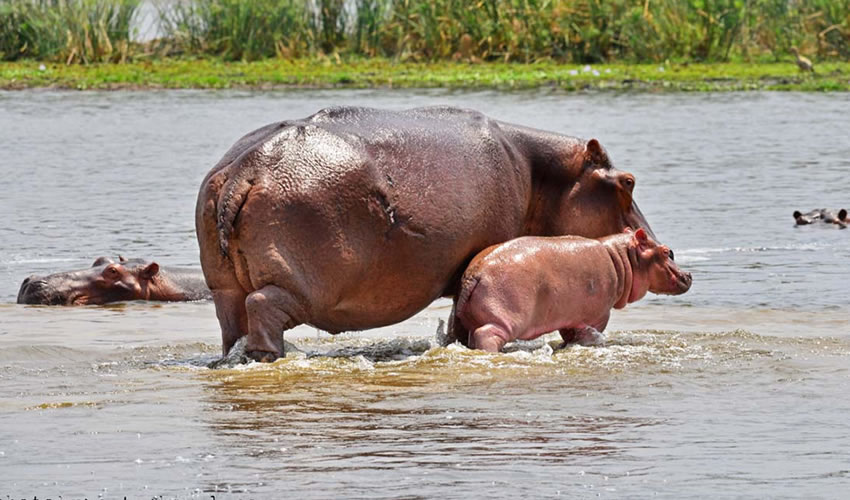 4 Days Safari Tour to Uganda