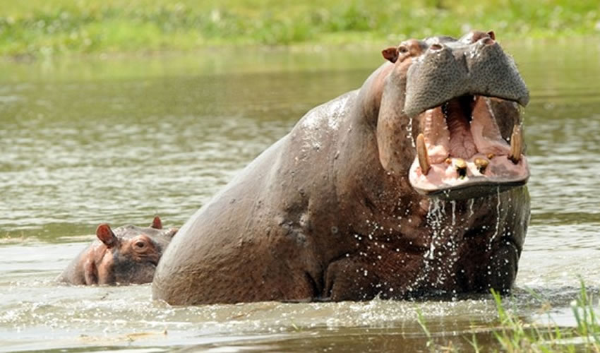 Kazinga Channel Safari in Uganda