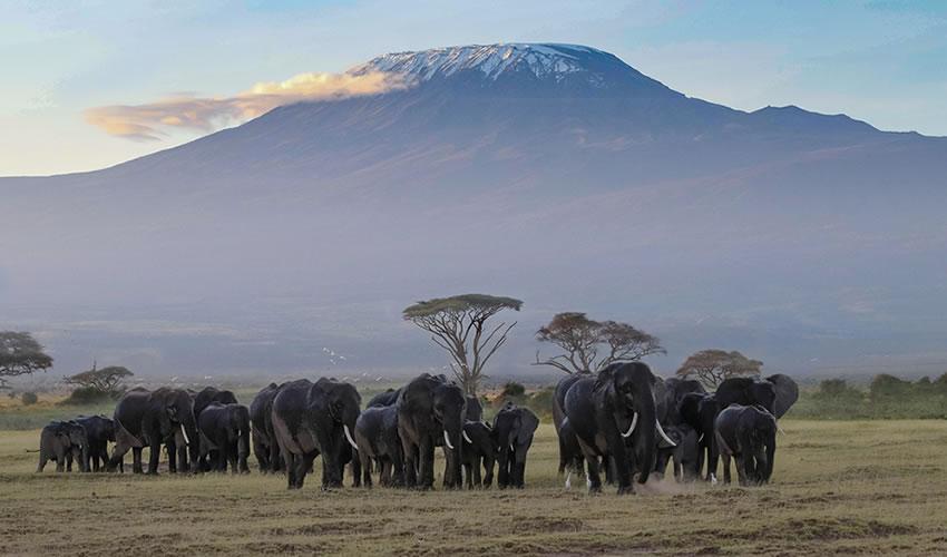 10 Days Wildlife Safari in Kenya