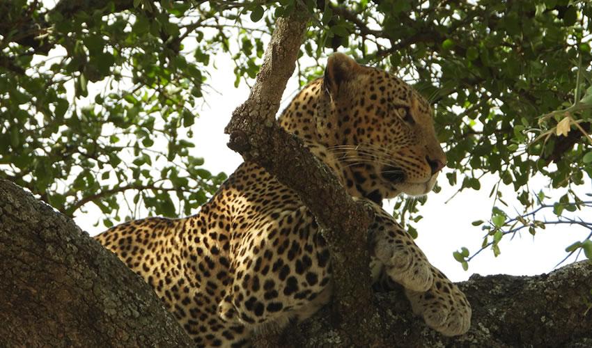 11 Days Kenya and Tanzania Safari Tour