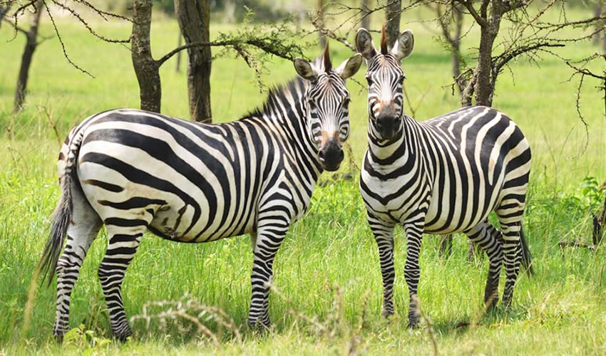 2 Days Safari to Lake Mburo National Park
