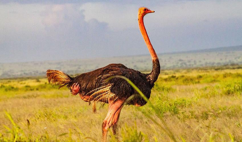 5 Days Birding and Wildlife Safari in Kenya