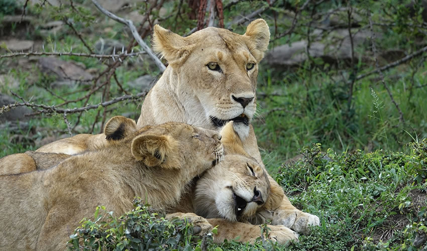 4 Days Budget Masai Mara Wildlife Safari to Kenya