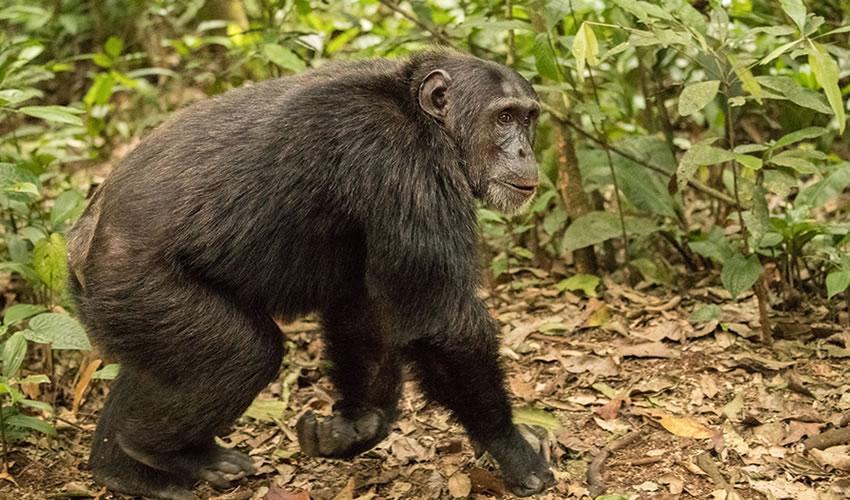 5 Days Safari to Nyungwe National Park in Rwanda