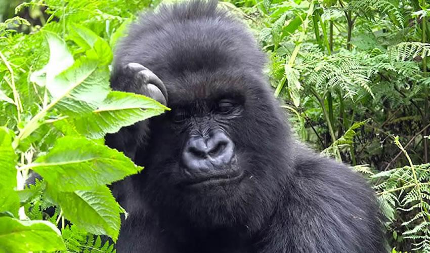 Visit Rwanda The Land Of A Thousand Hills