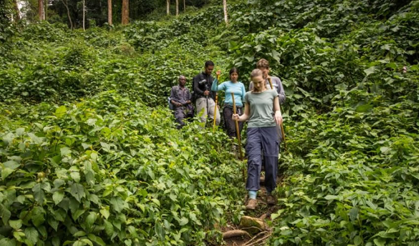Tourists in Bwindi Forest