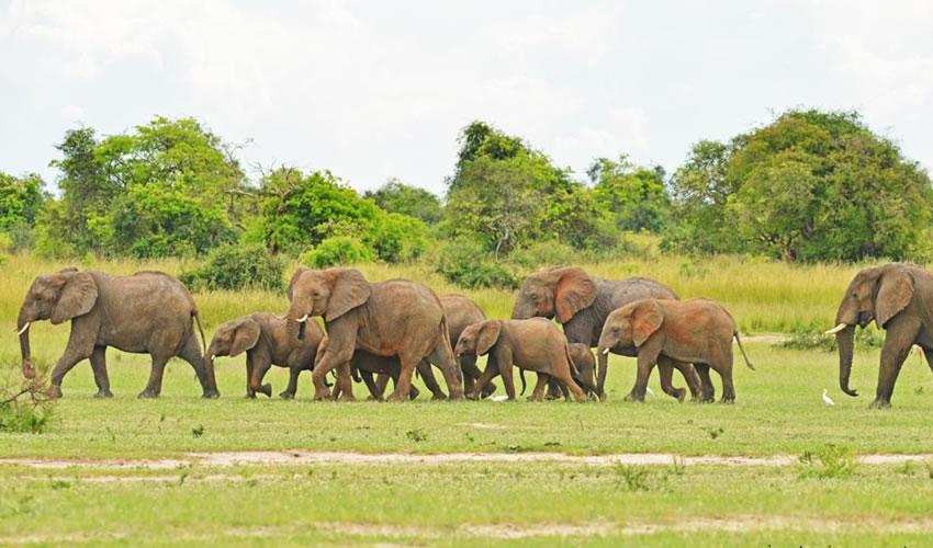 12 Days Murchison Falls National Park Safari