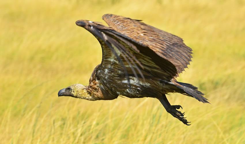 20 Day Uganda Bird Watching Safari