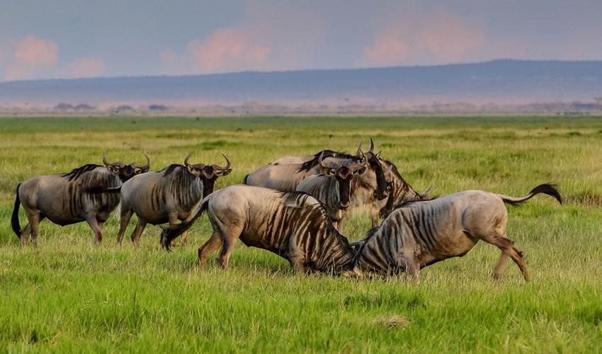 4 Days Masai Mara Safari Tour