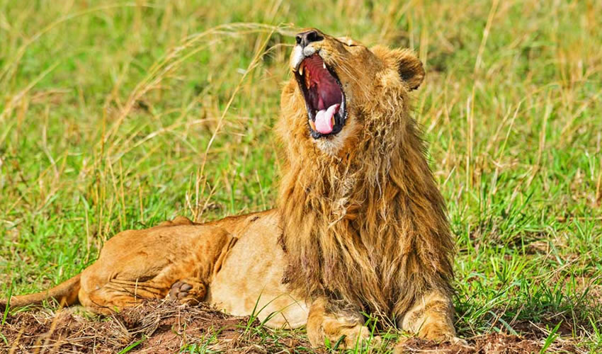 19 Days Wildlife Safari in Uganda