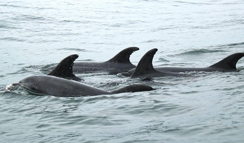 Zanzibar Island Dolphin Tour