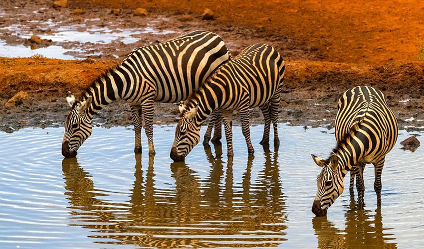 3 Days Amboseli National Park Tour