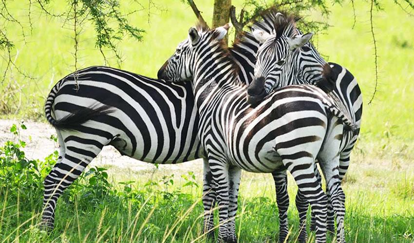 3 Days Lake Mburo National Park Wildlife Safari