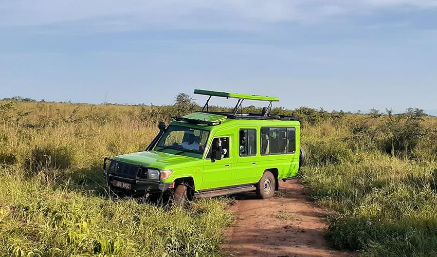 game drive in Uganda