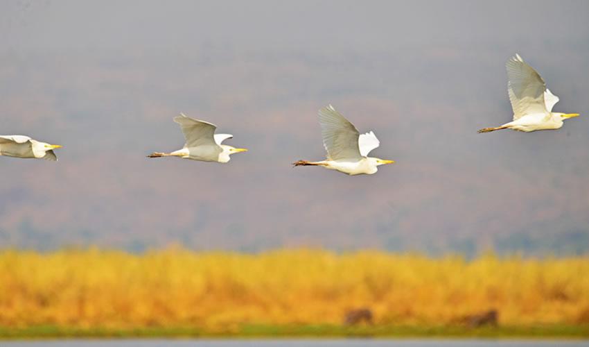 birding in Murchison Falls National Park