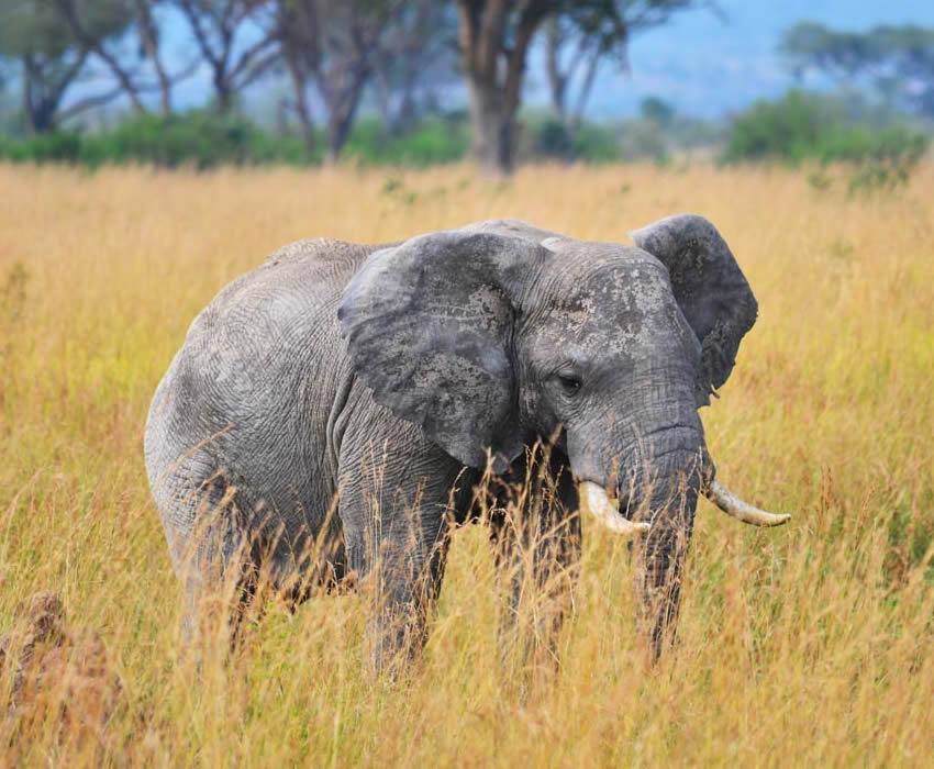 Top 5 Tourist Destinations in Uganda